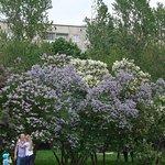 Billede af Lilac Garden