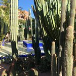 Photo de Jardin Majorelle