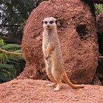 Photo of Oasis Park Fuerteventura