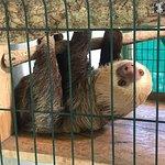 Foto di Sloth Sanctuary of Costa Rica