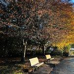 Billede af Golden Gardens Park