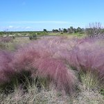 Foto de Robinson Nature Preserve
