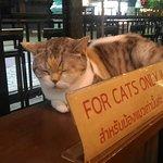 Bild från Cat 'n' A Cup Cat Cafe