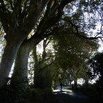 Foto van The Dark Hedges