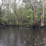 Cajun Pride Swamp Tours صورة فوتوغرافية