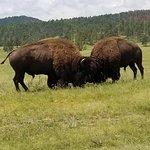 Foto van Custer State Park