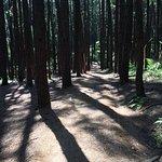 Φωτογραφία: Vagamon Pine Forest