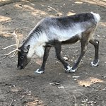 Parc Animalier d'Auvergneの写真