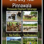 Pinnawala Elephant Orphanage Photo