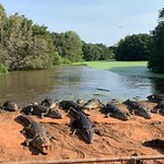 Bilde fra Malcolm Douglas Crocodile Park and Animal Refuge