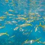 Spirit Snorkeling의 사진