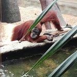 Valokuva: Prague Zoo