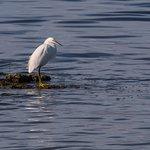Foto di Salton Sea