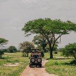 Foto Tarangire National Park