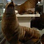 Photo de Kauno Tado Ivanausko Zoologijas Muziejus