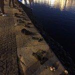 Фотография Туфли на набережной Дуная