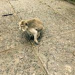 Foto di Sacred Monkey Forest Sanctuary