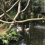 Bali Bird Park Foto