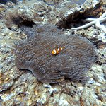 Bild från Love Diving Phuket