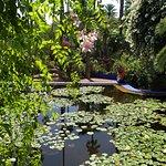 Foto di Giardini di Majorelle (Jardin Majorelle)