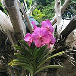 Palm Tree Gardens Botanical Garden Foto