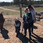 Outback Pony Rides Photo