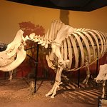 Photo de SKELETONS: Museum of Osteology