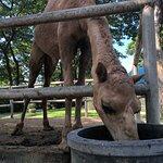 Foto de Camel Republic