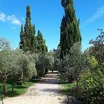Azienda Agricola Leda' d'Ittiriの写真