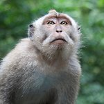 Foto di Sacred Monkey Forest Sanctuary