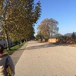 Le mura di Lucca Photo