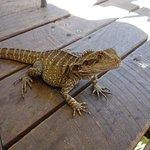 Photo of Frogs Kuranda