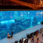 Photo of Dubai Aquarium & Underwater Zoo