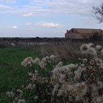 Photo of Valli di Comacchio - Servizi Turistici