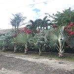 Billede af Havana Cafe of the Everglades