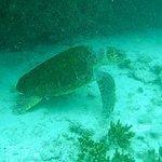 Dive Center Punta Amanay의 사진
