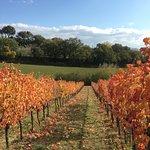 Photo de Azienda Agraria Brunozzi