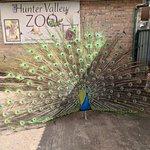 Hunter Valley Zoo Foto
