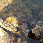 Foto di Swimming with Turtles
