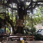 Foto de La Oveja Negra Mexican Bar & Restaurant