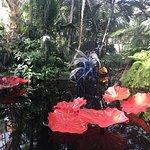 Foto di New York Botanical Garden