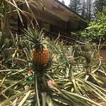 Lanai Culture & Heritage Center Foto