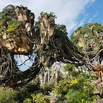 Photo of Disney's Animal Kingdom