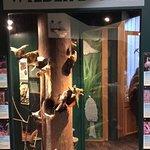 Billede af Lynn Canyon Ecology Centre