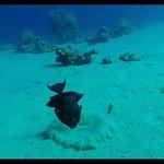 Фотография Dive Club Italiano Sharm