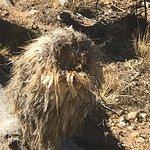 Billede af Red Rock Canyon National Conservation Area