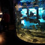Photo of Downtown Aquarium