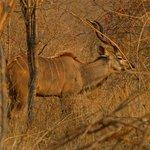 ภาพถ่ายของ Ruaha National Park