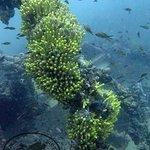 Wreck Tihany. Diving in Montenegro