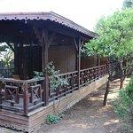 SENTIDO Flora Garden Photo